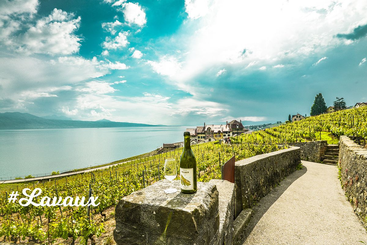 Lavaux vineyard